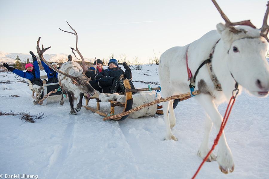 kjøpe reinsdyr med slede